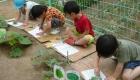 野菜をスケッチする園児の様子